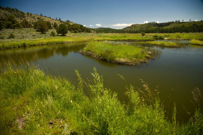 A bend in a calm river